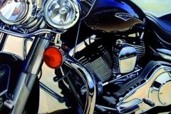 Harley-Oil-on-canvas-80-cm-x-50-cm